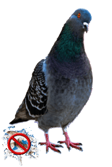 Bird Control Services & Deterrents for Pigeons, Vultures, Buzzards, Grackles, & Starlings for Organizations & Facility Professionals